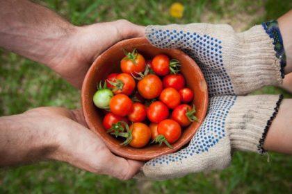 Produits biologiques: 10 idées reçues passées au crible