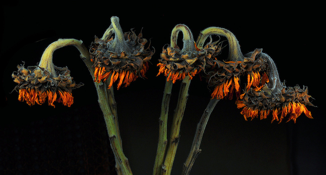 flore vaginale muqueuses irritation tampons