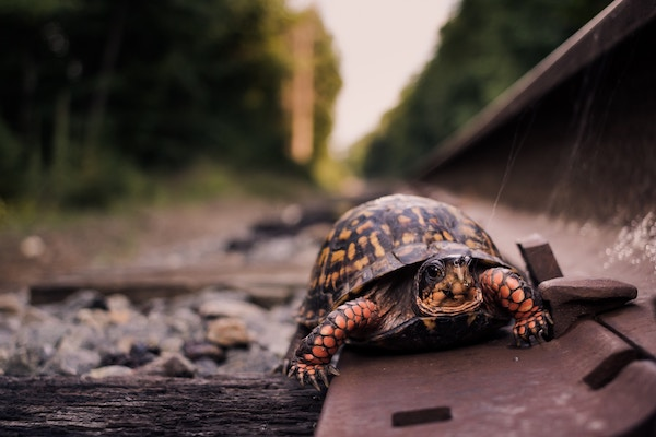 ralentir slow life