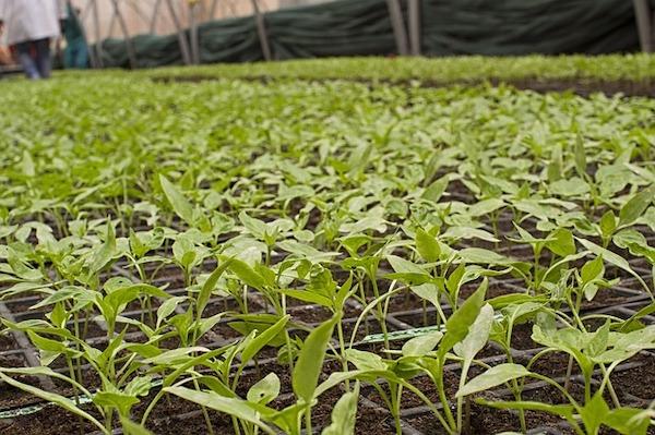 ferme bio pesticides ogm