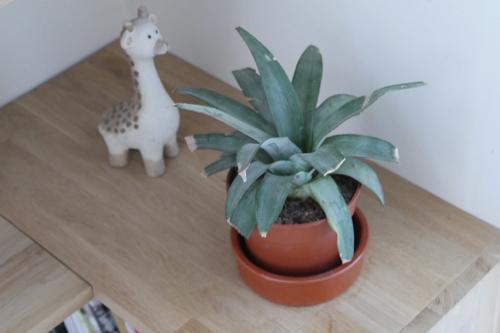 cadeaux à faire soi-même plantes